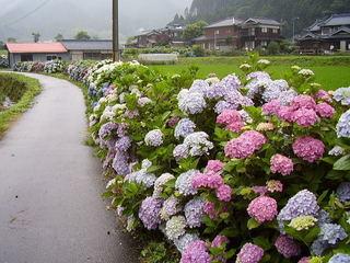 今西最寄門貝紫陽花の里写真022.JPG
